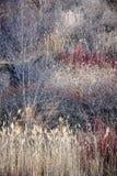 干草和光秃的树在冬天森林里 库存图片
