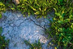 干草土壤 免版税库存图片