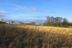干草在冬天 库存图片