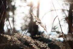 干草在日落的森林里在温暖的太阳 库存照片