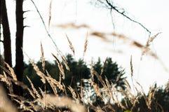 干草在日落的森林里在温暖的太阳 免版税图库摄影