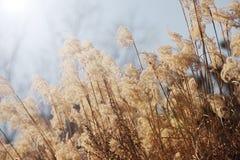 干草在有温暖的阳光的草甸开花植物 库存照片