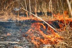 干草在灌木,火中在灌木区域燃烧 免版税库存照片