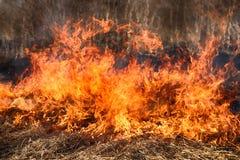 干草在灌木,火中在灌木区域燃烧 免版税库存图片