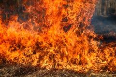 干草在灌木,火中在灌木区域燃烧 图库摄影