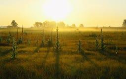 干草在草甸在森林有雾的早晨附近 库存照片