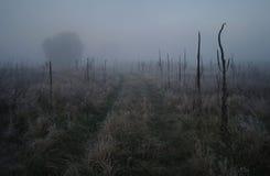 干草在草甸 图库摄影