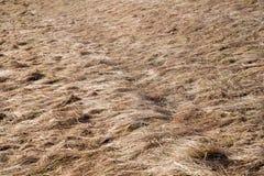 干草在草甸 免版税库存照片
