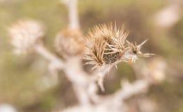 干草在雪的冬天 干植被 33c 1月横向俄国温度ural冬天 Frozenned草 选择聚焦 免版税图库摄影