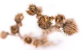 干草在雪的冬天 干植被 33c 1月横向俄国温度ural冬天 Frozenned草 选择聚焦 库存图片