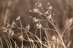 干草在雪的冬天 干植被 33c 1月横向俄国温度ural冬天 Frozenned草 选择聚焦 免版税库存图片