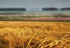 干草在领域的秸杆堆 库存图片