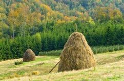 干草堆、草甸和五颜六色的树 库存图片