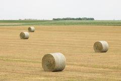 干草堆劳斯领域的 库存图片