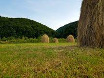 干草堆和绿草在山坡 农业领域在山区 美丽的乡下农村风景在晴天 免版税库存图片