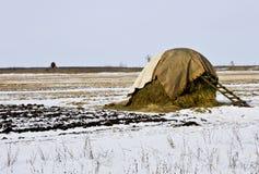 干草堆在干草附近的冬天天空是蓝色的雪 库存图片