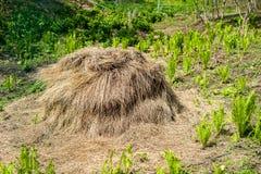 干草堆在森林 库存照片
