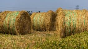 稻干草堆在沙白安南县,马来西亚 免版税库存照片