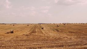 干草堆在领域在日落 农村领域在与大包的夏天干草 股票录像