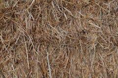 干草堆1 库存照片