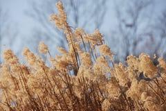 干草开花植物,草甸冬天背景 免版税图库摄影