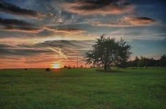 干草捆和偏僻的树在一个草甸反对美丽的天空与云彩在日落 免版税库存照片