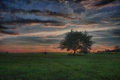 干草捆和偏僻的树在一个草甸反对美丽的天空与云彩在日落 图库摄影