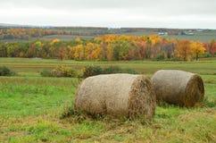 干草捆和秋叶在北部纽约农场和小山  免版税库存图片