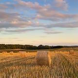 干草捆在夏天,多西特,英国 库存照片