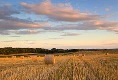 干草捆在夏天,多西特,英国 免版税库存图片