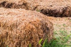 干草捆特写镜头在村庄 在农村场面的干燥干草堆 库存图片