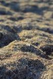 干草是干燥的 纹理和背景 库存图片