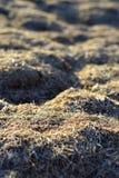 干草是干燥的 纹理和背景 免版税库存图片