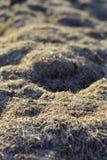 干草是干燥的 纹理和背景 库存照片