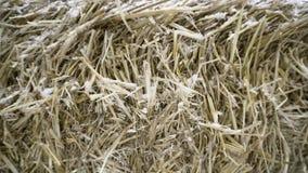 干草特写镜头在雪的 英尺长度 被压缩的混乱干草盖以一点雪喂养家畜在冬天 影视素材