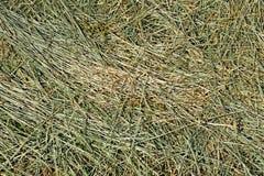 干草用谷物和其他狂放的草本 库存照片
