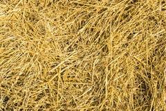 干草的样式 免版税库存照片