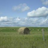 干草的领域 免版税库存图片
