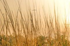 干草花田在与阳光的早晨 库存照片