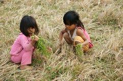 干草草甸的可怜的孩子 免版税库存图片