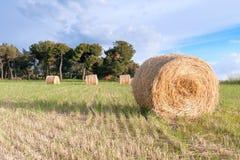 干草螺旋在前景的有领域土气背景  免版税库存图片