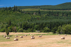 干草领域和新的劳斯 库存照片