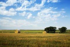 干草领域在水牛城空白南达科他草原  免版税库存图片