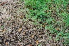 干草 美丽的概念保护夫妇环境绿色重点叶子草甸安置了红色春天 库存图片