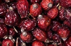 干莓果dogrose野玫瑰果背景特写镜头照片  健康食物和农业概念 免版税库存图片
