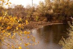 干莲花在一个小水库退了色 免版税库存照片