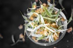干菩提树花和叶子在一个透明玻璃碗在黑背景 背景弄脏了关心概念表面健康防护屏蔽的药片 库存照片