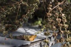 干蓬蒿草本在桌放置 在棕色颜色的背景 库存图片