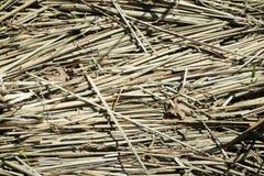 干薹和老干燥叶子在阳光下在秋天 免版税库存照片