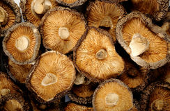 干蘑菇椎茸 库存图片